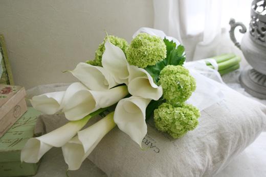 http://www.alegria-flor.com/N_fresh/images/ar021.jpg